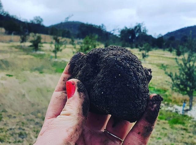 Ballandean truffles